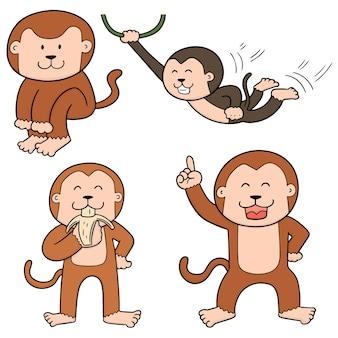 Set of monkey