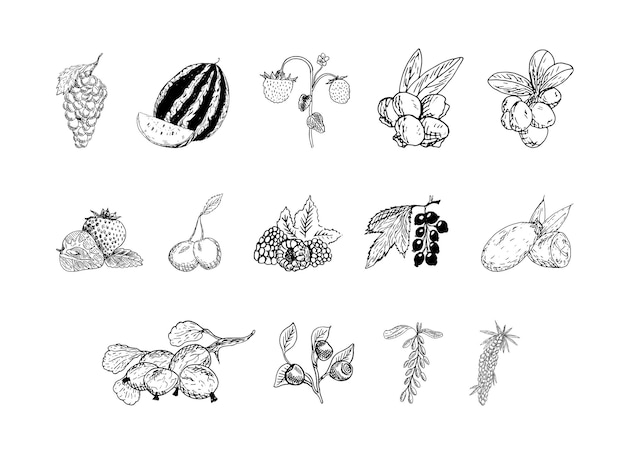 Set of monochrome illustrations of berries in sketch style