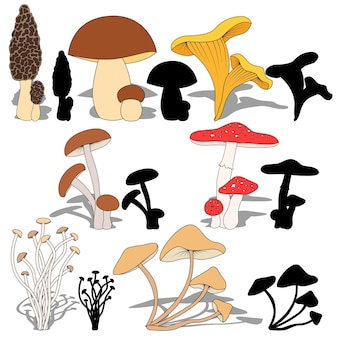 Установите грибы и их силуэты на белом фоне.