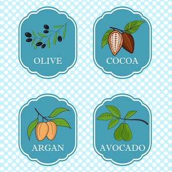 Set of natural ingredients and oils for beauty and cosmetics - packaging design templates and emblems - olive, avocado, cocoa and argan.   illustration.