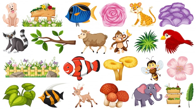 Set of nature and animals