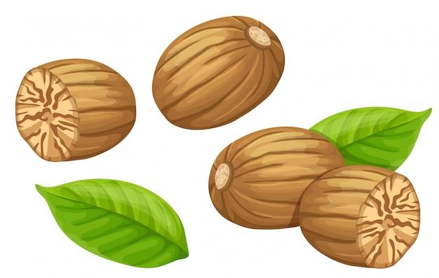 Set nutmeg and leaf.