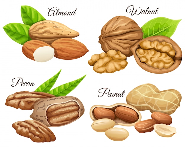 Set of nuts almond, walnut, pecan, peanut.