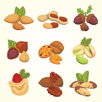 漫画のスタイルでナッツを設定します。ナッツフードコレクション。ピーナッツ、ヘーゼルナッツ、ピスタチオ、カシューナッツ、ペカン、クルミ、ブラジルナッツ、アーモンド