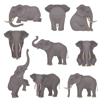 Set o elephants in different poses. african of asian mammal animals with large ears and long trunks.