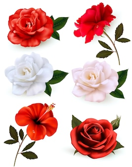 Набор красивых цветов, изолированные на белом фоне.