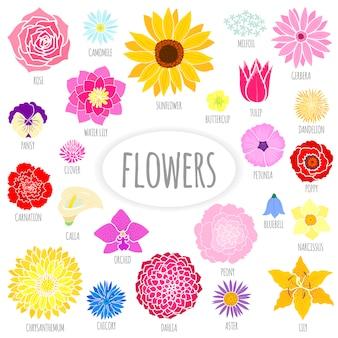 抽象的な平らな花のセット