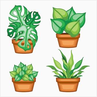 Набор эстетичных растений в горшке