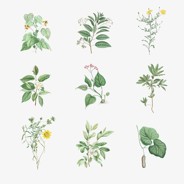 골동품 식물 잎 세트