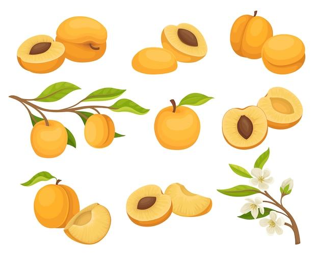 Набор абрикосовых иконок. сочные и спелые летние фрукты. небольшая ветка с цветами. натуральная и здоровая пища