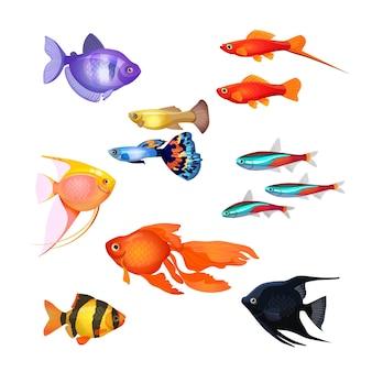 水族館の魚のセット。金魚、poecilia reticulataとコイ、カクレクマノミ、ネオンマリンペット、黒と紫の魚。リアルでおとぎ話のような水中キャラクター。編集可能な孤立した要素。