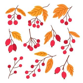 Набор осенних ягод с золотыми листьями, изолированные на белом фоне