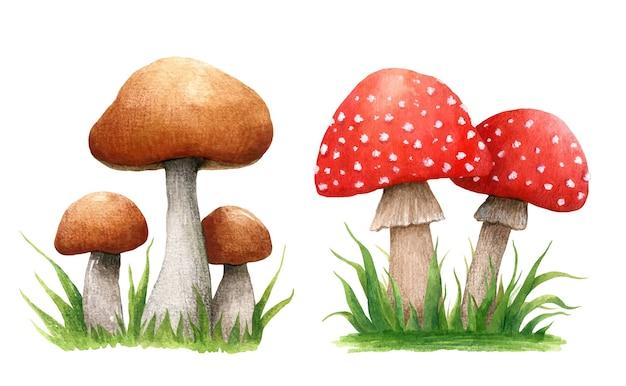 草の中に森のキノコと秋の構成のセット。白い背景で分離されたポルチーニとテングタケ属