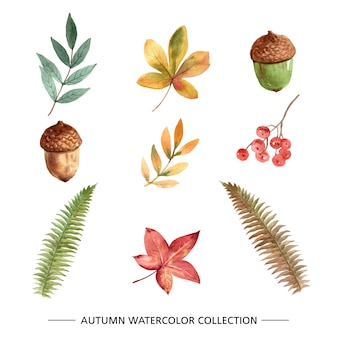 秋の創造的な水彩画のセット