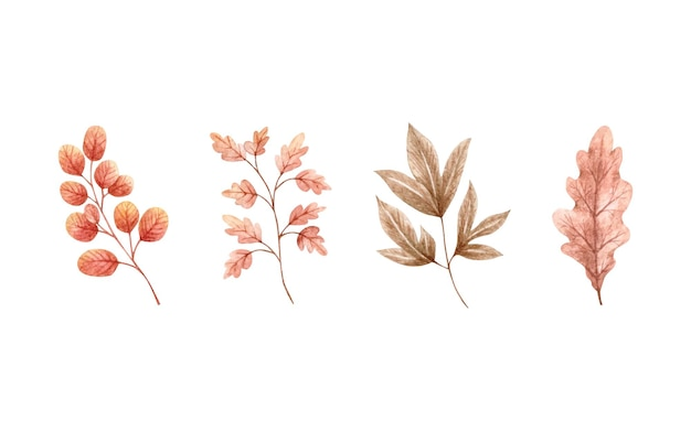 가 말린 잎 컬렉션 세트