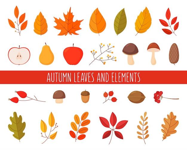 秋の紅葉と要素のセット。シンプルな漫画フラットスタイル。白い背景で隔離の図。