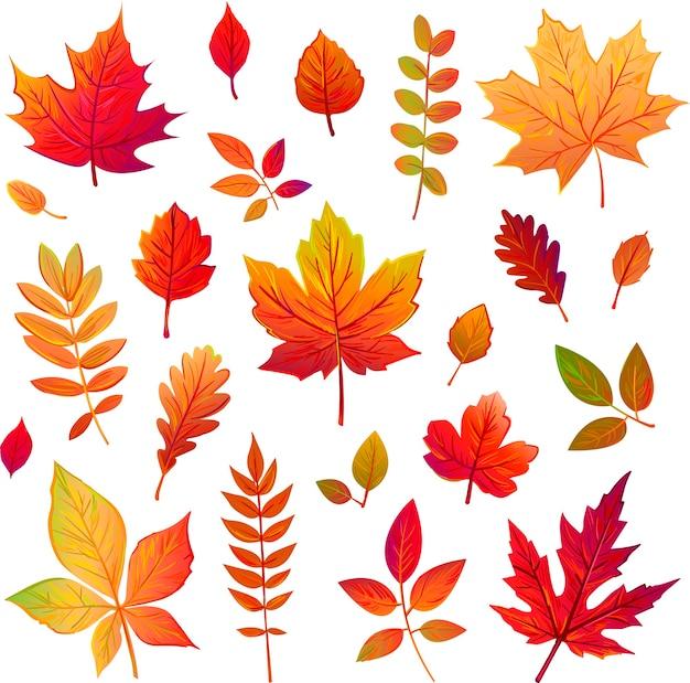 Набор осенних листьев с разных деревьев
