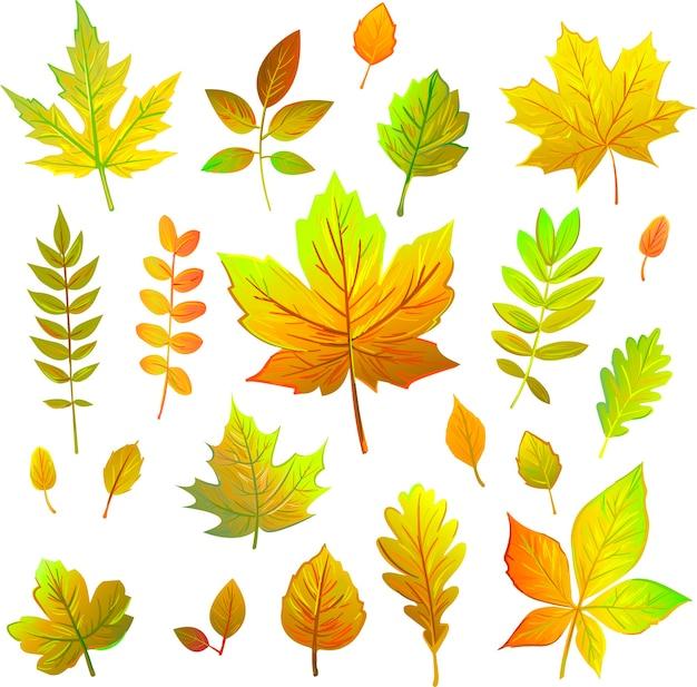 Набор осенних листьев, изолированные на белом фоне