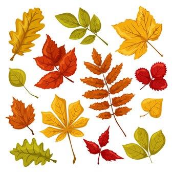 단풍 세트 오크 아카시아 딸기 메이플 아스펜 헤이즐넛 밤나무 잎