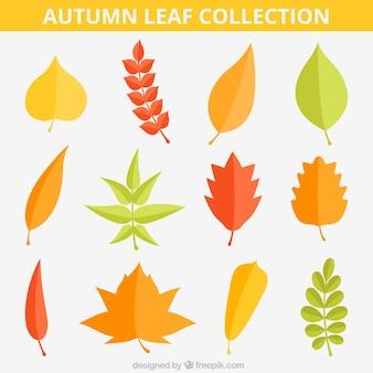 Набор осенние листья в плоском стиле