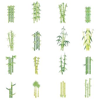 대나무 식물의 세트