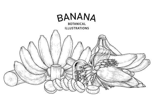 Набор банановых фруктов и банановых цветов рисованной эскиз