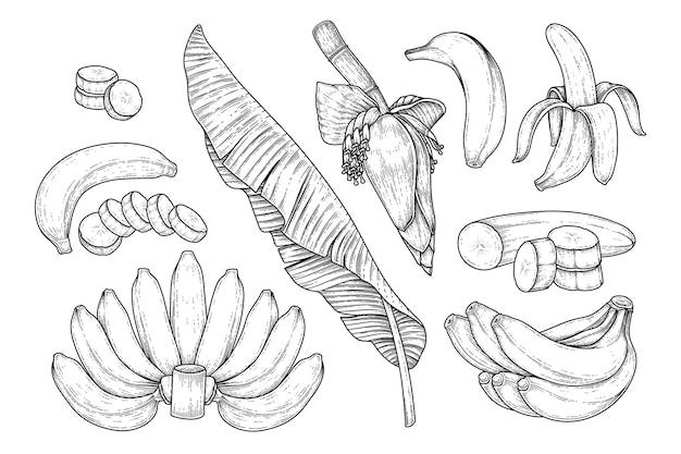 Набор банановых фруктовых листьев и банановых цветов рисованной эскиз