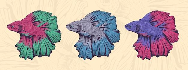 美しくカラフルなベタの魚のイラストのセット