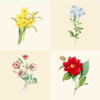 Set of beautiful blooming wildflowers