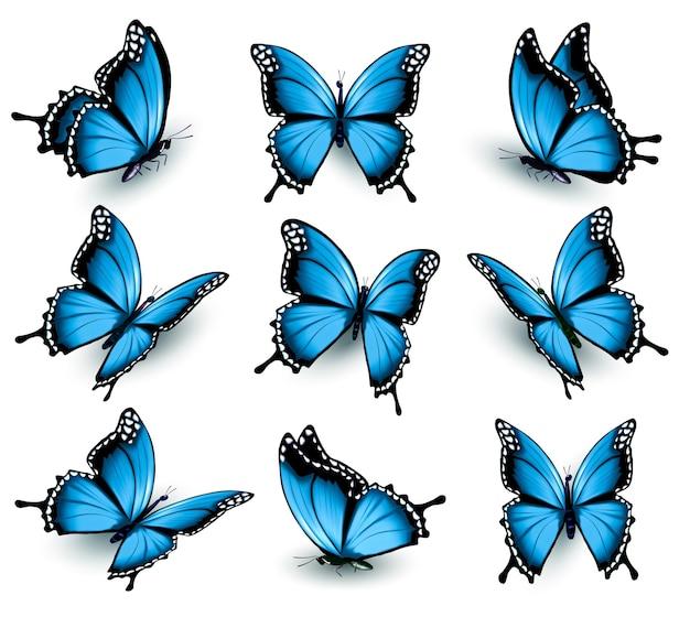 아름 다운 푸른 나비의 집합입니다. 벡터.