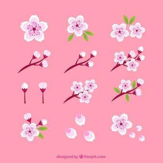 美しい桜の花のセット