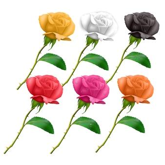Набор красивых роз на длинном стебле и с шипами, изолированные на белом фоне