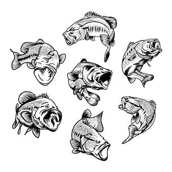 釣りロゴのための大きなバスフィッシュのイラストのセット