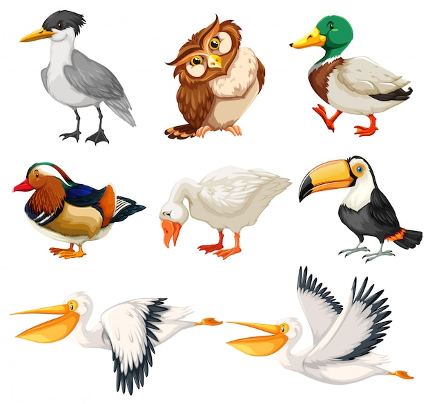 鳥のキャラクターのセット 無料ベクター
