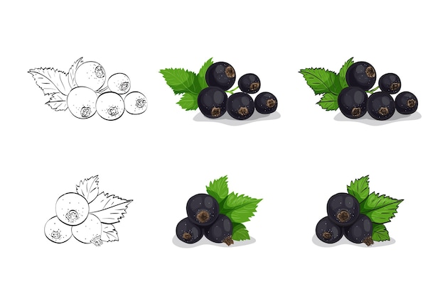 白で隔離の葉と黒スグリの果実のセット