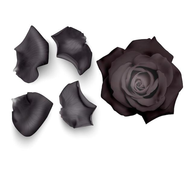 검은 장미 꽃잎 세트
