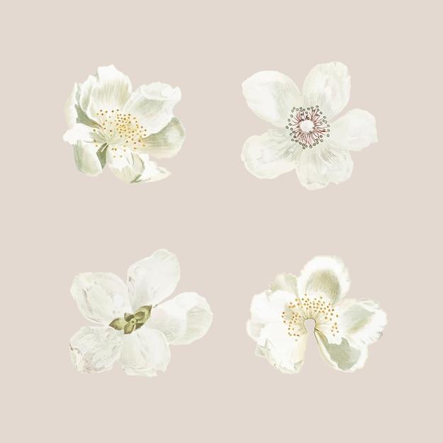 개화 꽃 세트