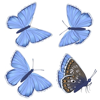 白い背景で隔離の青い蝶シジミチョウ科のセット。