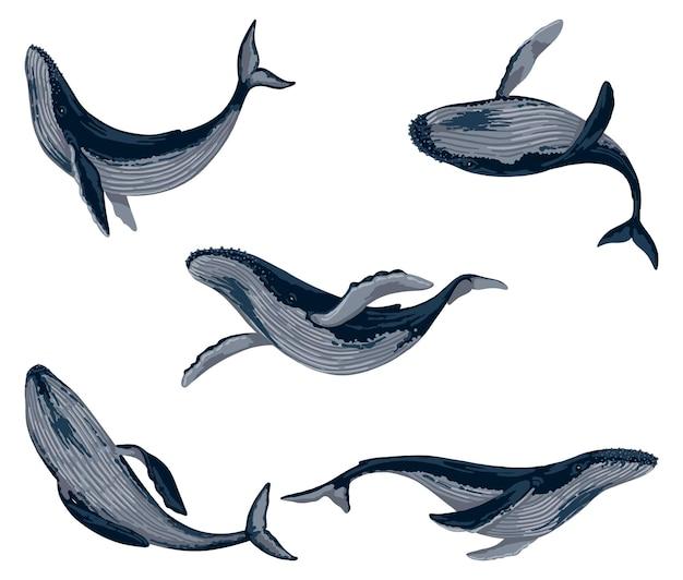 Набор синих китов. коллекция животных млекопитающих океана. красивая подводная фауна. рисованной векторные иллюстрации. рисунки шаржа, изолированные на белом.