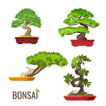 白で隔離のコンテナベクトルイラストで育った盆栽日本の木のセットです。ミニチュアポットで成長している巨大な幹を持つ緑の木