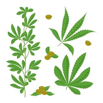 식물 대마초 잎 세트