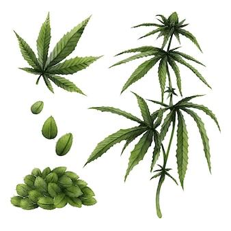 植物の大麻の葉のセット