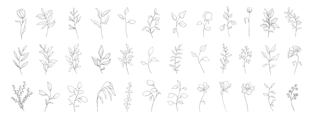 Набор ботанических линий искусства цветочные листья, растения. рука нарисованные эскиз ветвей, изолированные на белом фоне. векторная иллюстрация