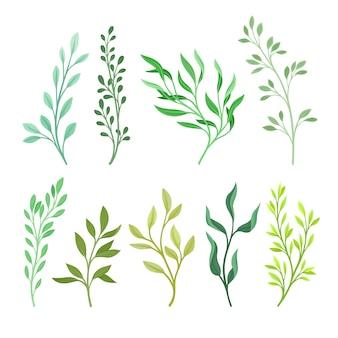 緑の葉を持つさまざまな植物の枝のセット