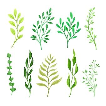異なる葉を持つ枝のセット
