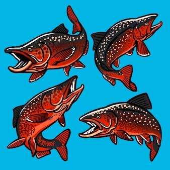Набор ручейковой форели для коллекции gamefish