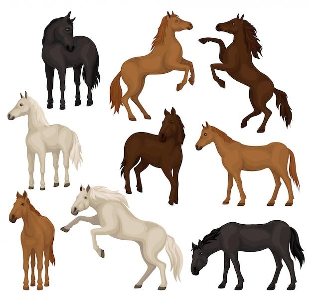 다른 포즈에 갈색, 베이지 색 및 검은 말의 집합입니다. 발굽, 흐르는 갈기와 꼬리를 가진 큰 포유 동물.