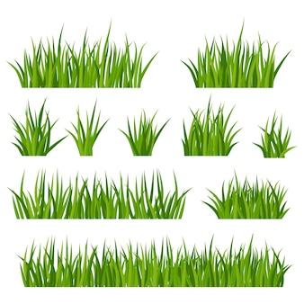 牧草地または芝生に花と緑の草の束のセット。夏の牧草地の植物、カモミールの花序。素朴な風景、田舎の農場。