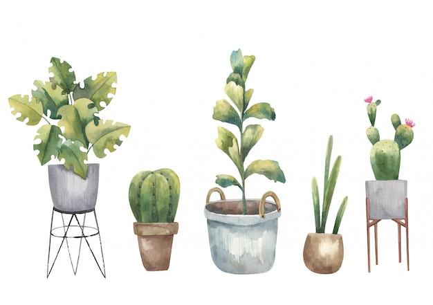 흰색 배경에 선인장, 집 식물 및 다육 식물 수채화 그림의 집합
