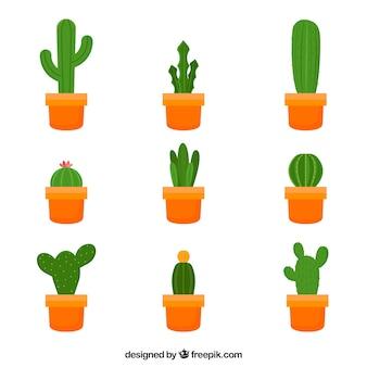 Set of cactus in flat design